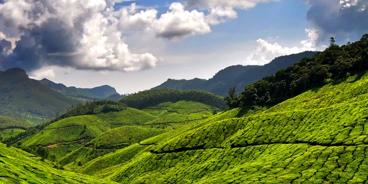 Munnar, the unending extent of greenery of Kerala's own Hill Station