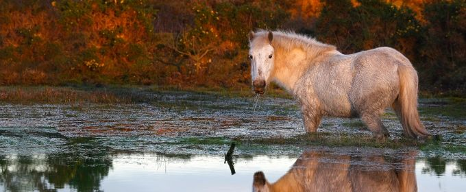 2014 could be a year to remember for the New Forest National Park - find out more at www.newforestnpa.gov.uk/NFNPAblog