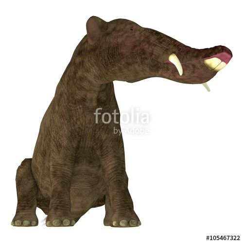 Platybelodon on White - Platybelodon was a herbivorous extinct mammal related to the elephant that lived in Miocene Era in Africa, Europe, Asia and North America.