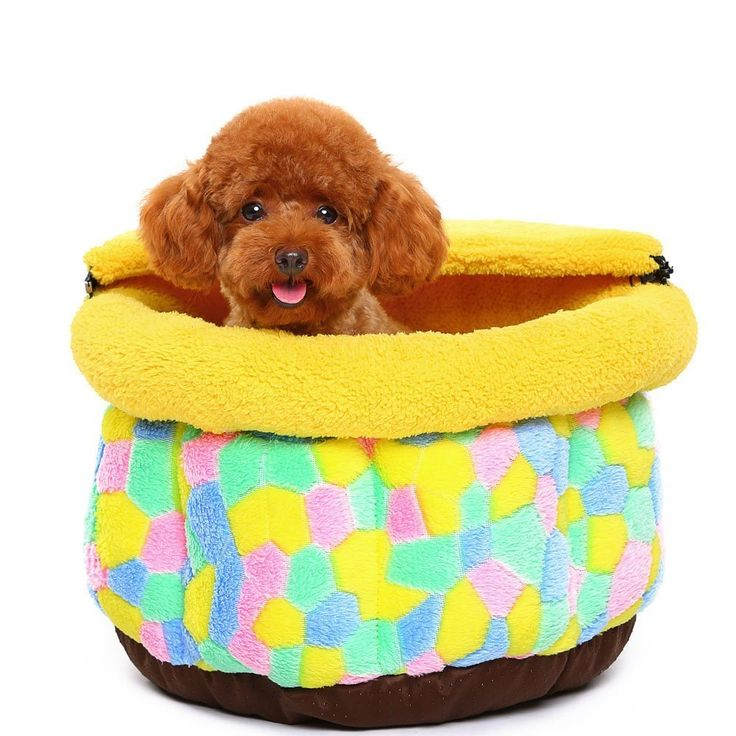 Best Dog Cage For A Bichon