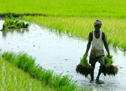 Dependency of Indian agriculture on Monsoon  http://www.skymetweather.com/content/agriculture-and-economy/dependency-of-indian-agriculture-on-monsoon/