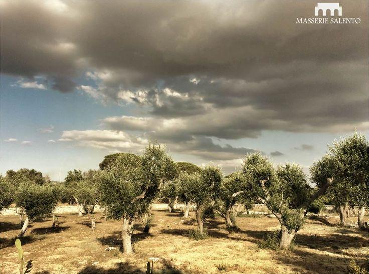 masseria_ceratonia_03
