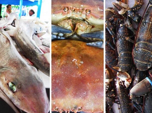 Merenelävät. seafood