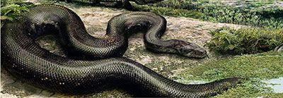 Snakes, Form of and Monsters on Pinterest