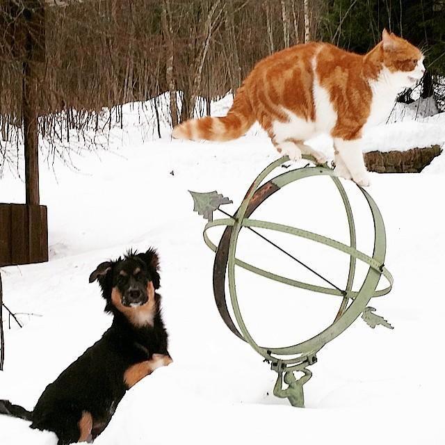 Lillebror tycker om att jaga katterna  #katt #cat #magnus #hund #dog #lillebror #djur #be… http://ift.tt/1zCJOmd