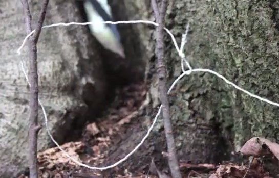 Build An Easy Snare Trap