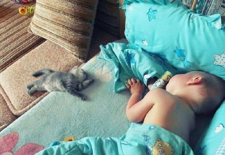 смешные картинки с младенцами и животными с добрым утром очередному соревнованию