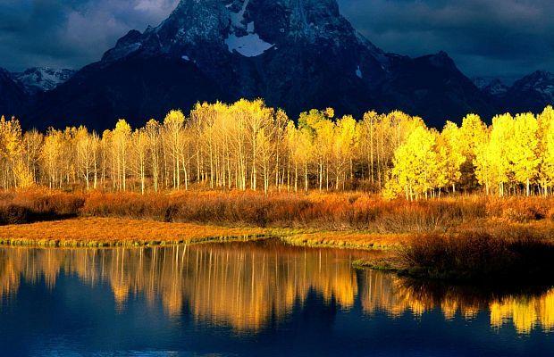 Одним издревнейших икрупнейших организмов планеты является дерево— аточнее, целый осиновый лес. Онрасположен вСША, вштате Юта, исостоит из47 тысяч деревьев сединой корневой системой. Общая площадь леса— 43 гектара, возраст— около 80 тысяч лет.