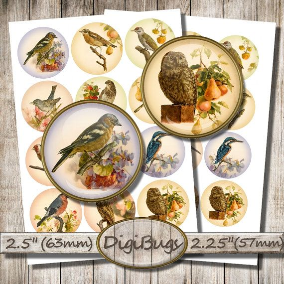 Birds on Floral Background, Digital Collage Sheet, 2.5 inch & 2.25 inch Circles, Round Bird Images, Printable Download DigiBugs, a1