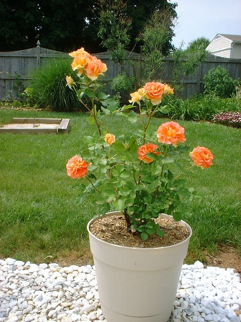 Tales From The Mountainside: Container Gardening  The Basics