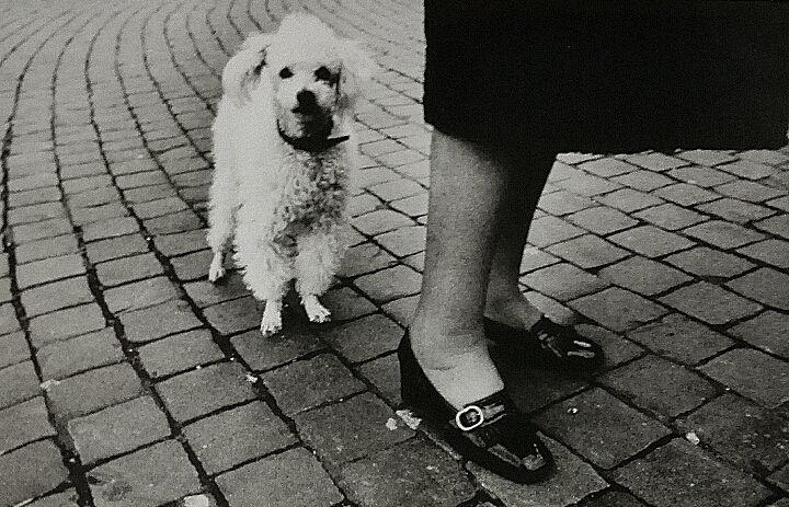 A Ignasi y aSergi, por el aliento de dragón A mamá le olían los pies. Cuando llegaba de la calle Se quitaba las medias de nailon Y los zapatos anónimos Y estiraba las piernas. A mamá le olían lo p…