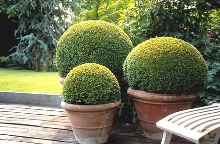 love topiary...have two small trees...must get more