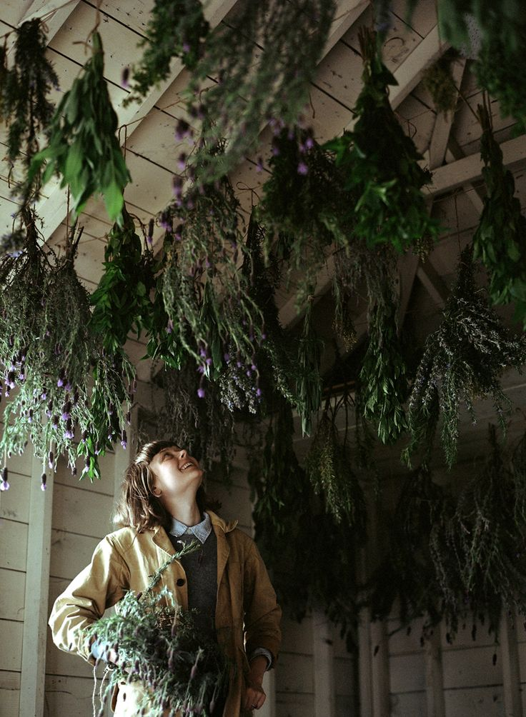 How to Dry Herbs (and other preservation methods) photo credit: Parker Fitzgerald