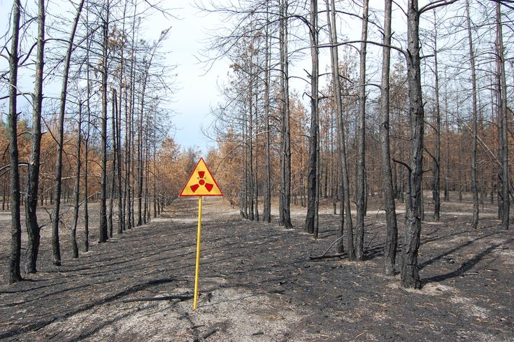 The forests around Chernobyl are still heavily contaminated with radiation from the 1986 Chernobyl nuclear disaster.