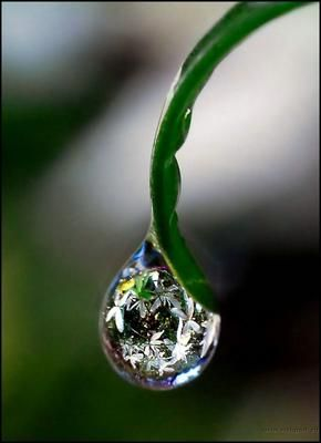 a drop of rain on a flower leaf. #drip