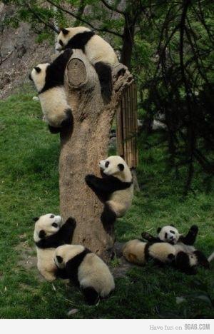 Panda! by Moshi Moshi