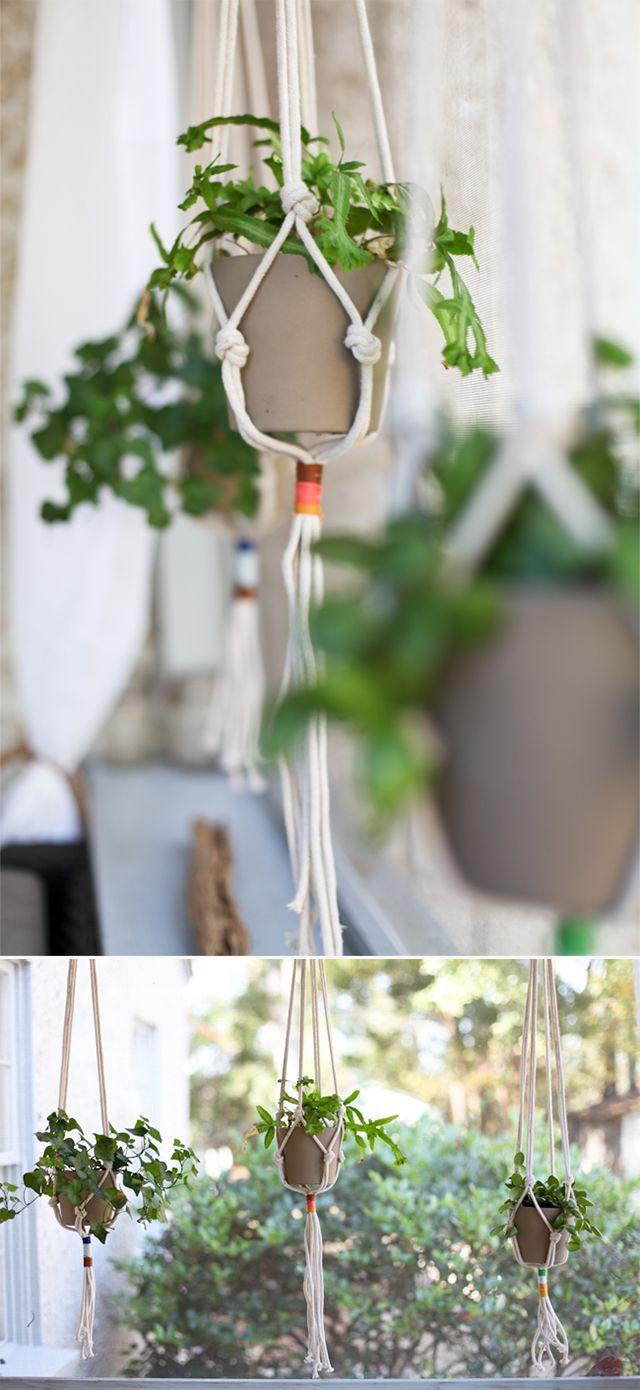 Best 569 Plants Indoor Hanging