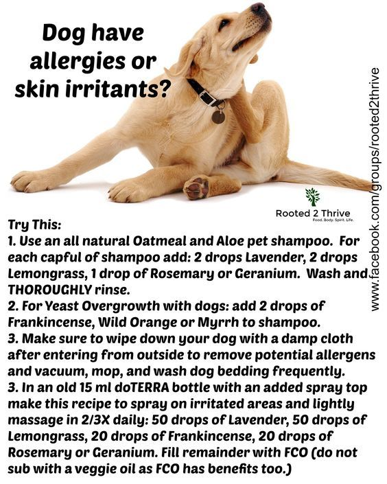 How to help our dogs with allergies and skin irritants naturally using essential oils. Order Oils: www.rooted2thrive.com/doterra Facebook Group: www.facebook.com/groups/rooted2thrive: