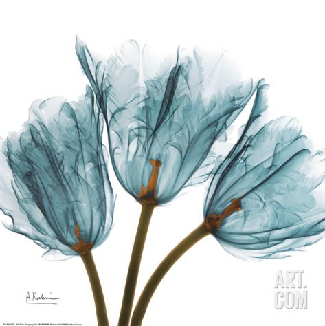 Tulips in Blue Art Print by Albert Koetsier at Art.com