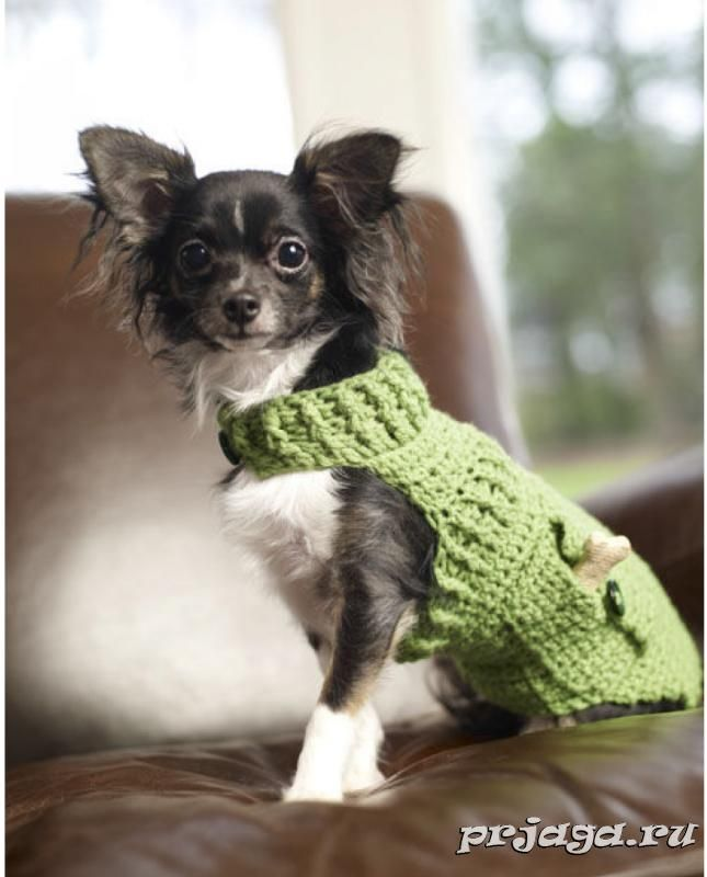Одежда для собак крючком