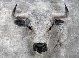 toro ensabanado - Buscar con Google