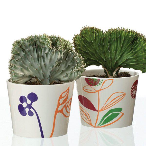 Extrêmement Les 25 meilleures idées de la catégorie Cactus euphorbia sur  ZO76