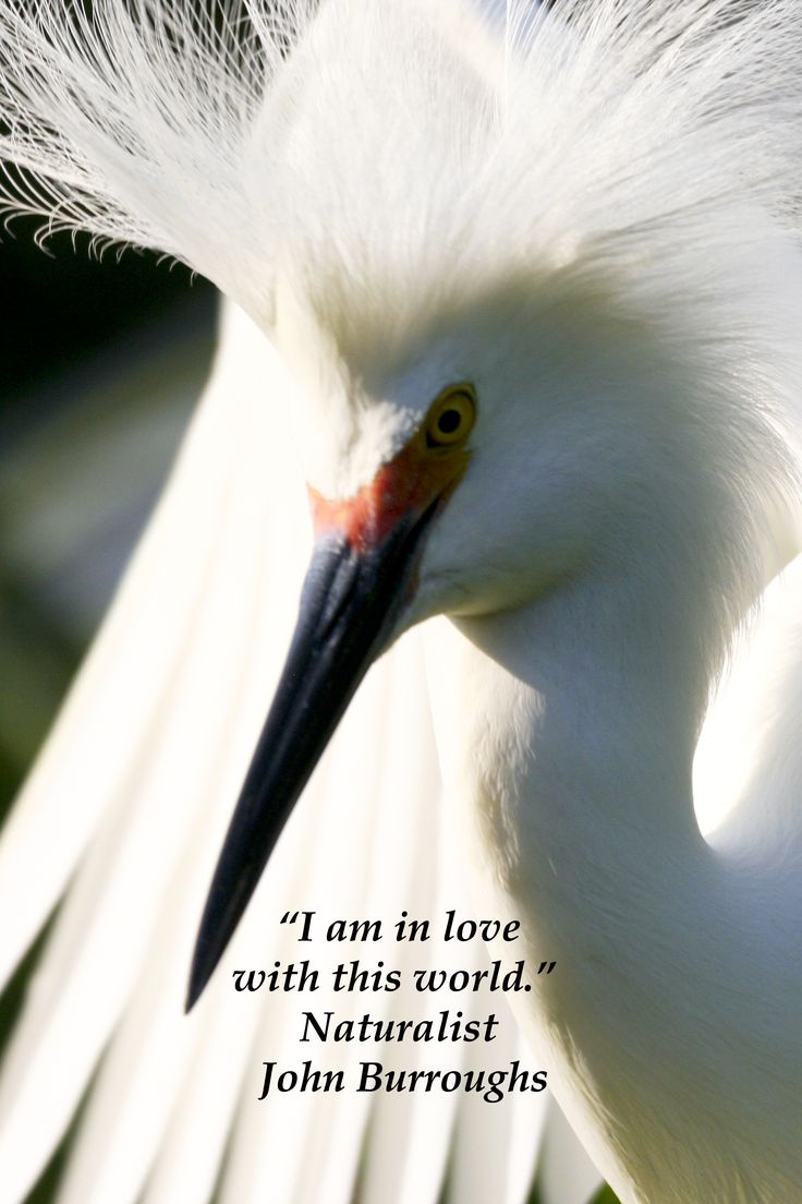 best quotes to inspire minds and hearts images snowy egret in st ine florida ldquoi am in love