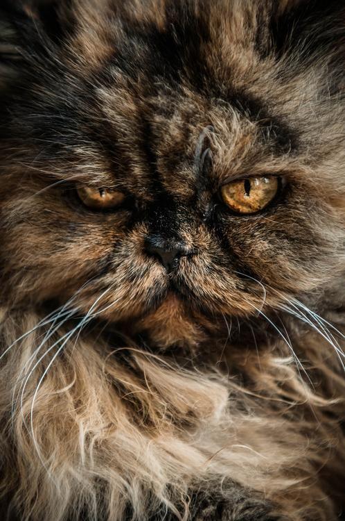 photogenic felines | (Mait Jüriado)