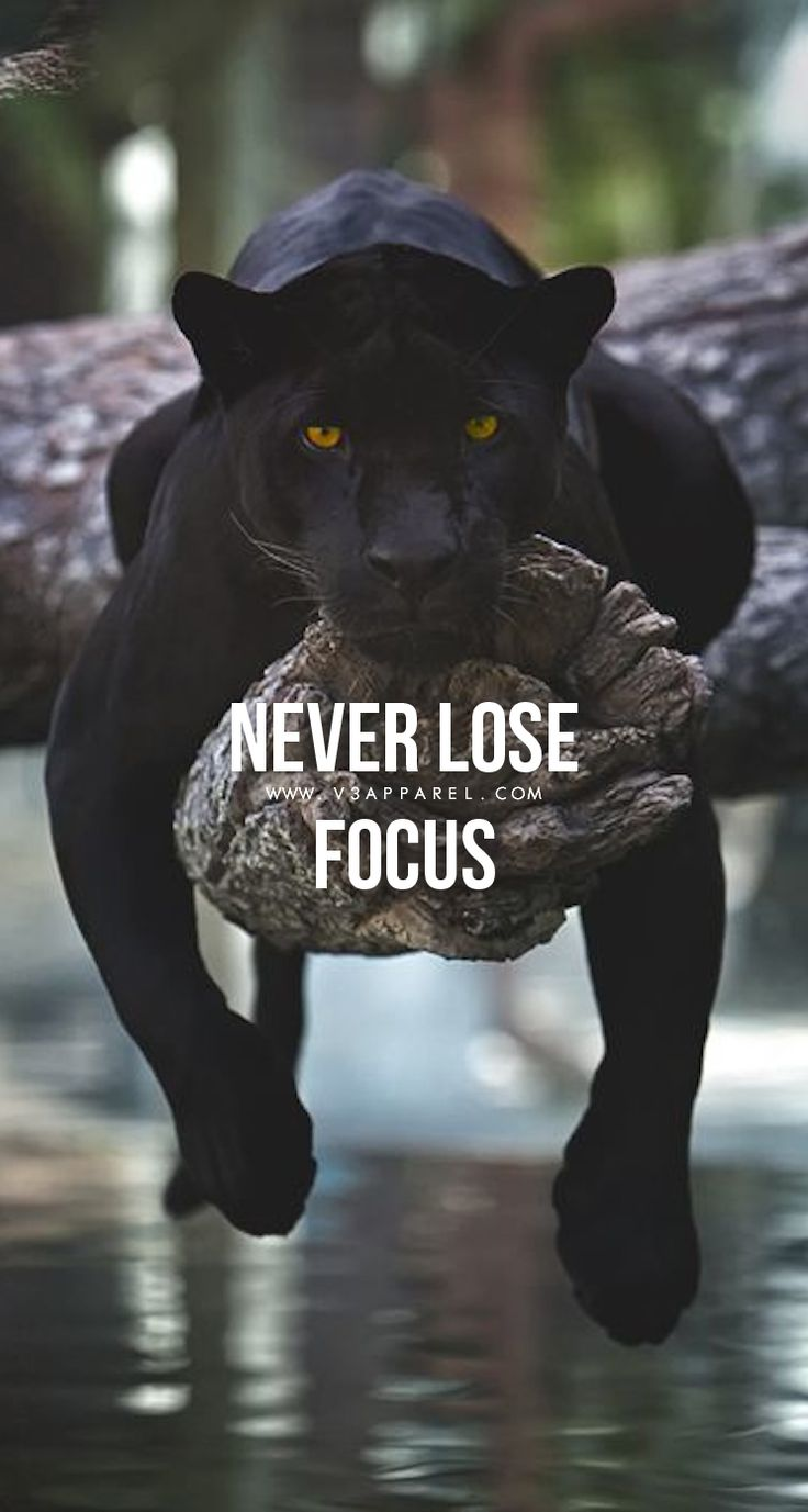 Animal Workout Quotes