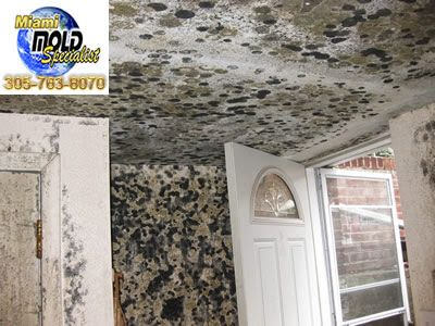 "Miami Beach Mold Inspection  We provide a simple, no-nonsense approach to #fixing #mold #problems that we like to call ""Miami Mold Specialists."" Call Us Now 8305-763-8070 Guaranteed LOWER price than the competitor! http://www.miamimoldspecialists.com/ http://www.miamimoldspecialist.com/"
