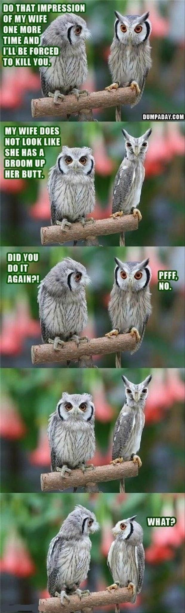 Funny Animal Pictures - 35 Pics