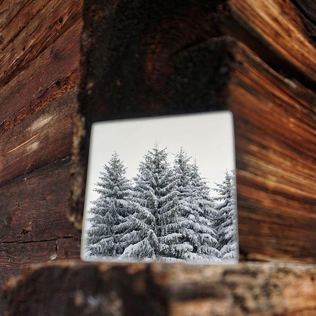 Neu im #Spiegelprojekt: Blick auf einen Schweizer Bunker (ja  ja so sehen die hier aus) und auf verschneite Tannen.