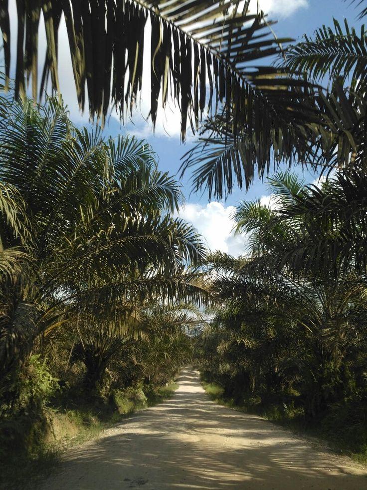 State's Palm Oil Plantation Company, Muaro Jambi