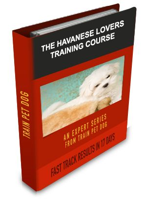 Havanese Training: Learn All About Training Havaneses & Taking Care of Them