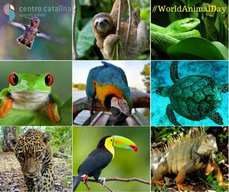 Happy #WorldAnimalDay! What's your favorite Colombian animal? 🐵🐯🐍🐸