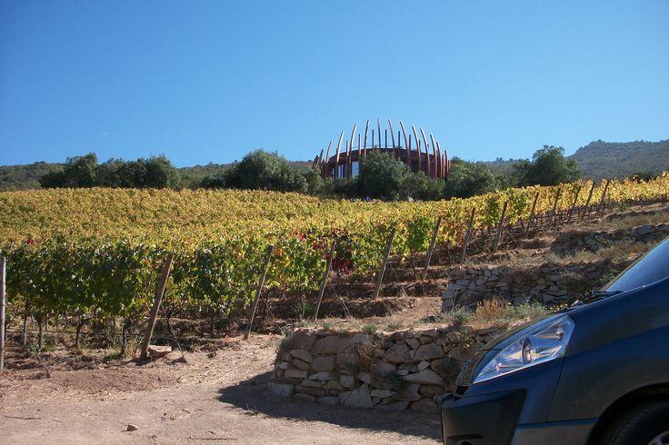Viñedo lapostolle  Lapostolle Vineyard Colchagua Valley, Chile