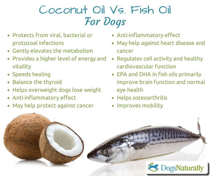 coconut oil vs fish oil for dogs healthy pets pinterest