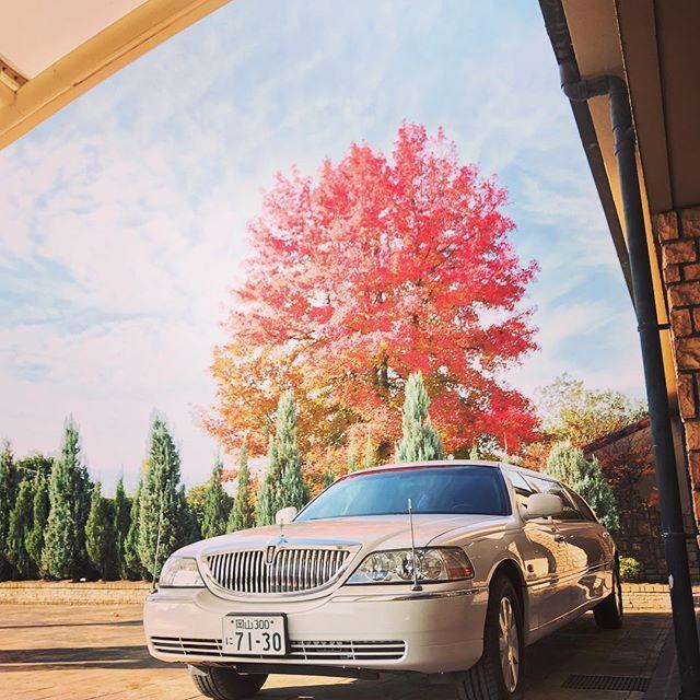 エントランス前の 楓の木が真っ赤に色付いています。 #紅葉 #秋 #秋コーデ #楓 #見頃 #季節 #リムジン #カメラ #写真好きな人と繋がりたい #インスタ映え #ゲストハウス #ウエディングテーマパーク #ウエディングのための街 #岡山 #岡山花嫁 #岡山結婚式 #旧2号線沿い #アトラクションのような場内 #ワクワク #楽しい #花 #クリスマス #限定フェア #前撮り #結婚式準備 #相談会 #instabride #wedding #プリムローズ