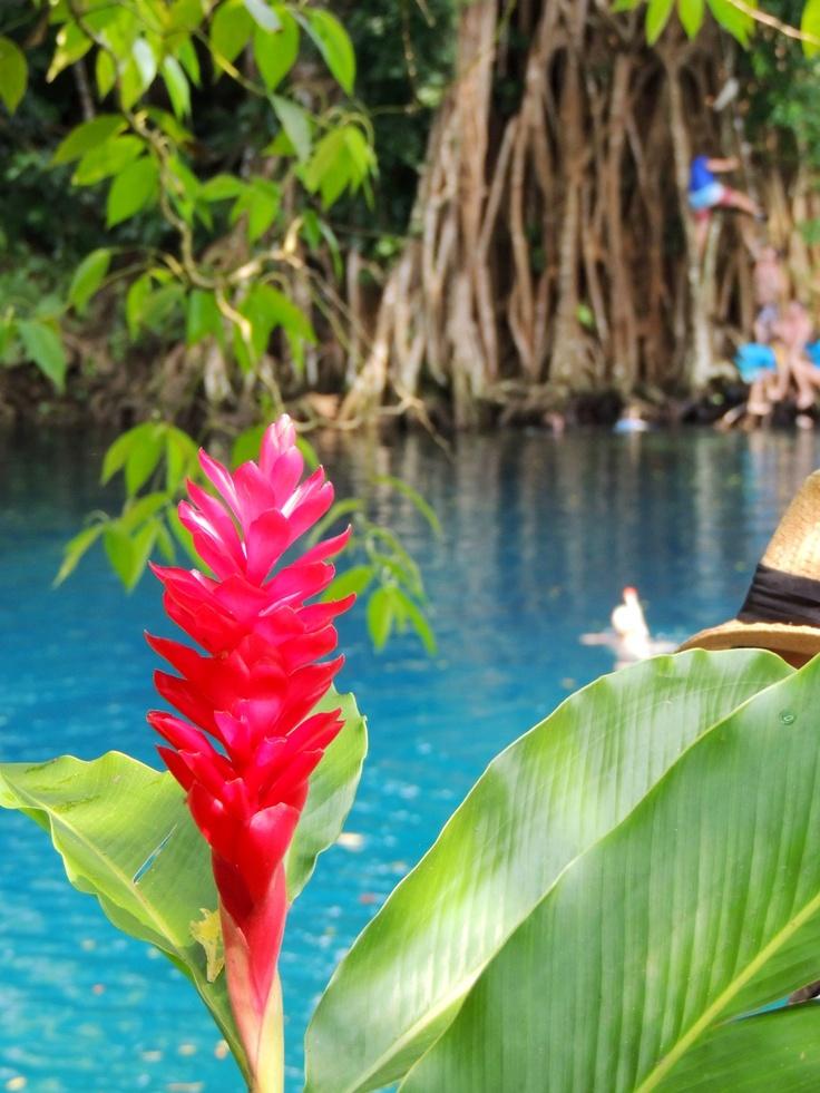 Blue Hole, Espiritu Santo, Vanuatu islands.