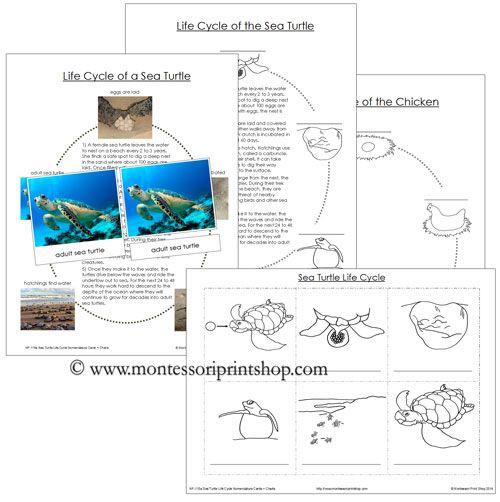 Diagram Parts Of A Turtle: 66 Best Montessori Nomenclature (in Color)