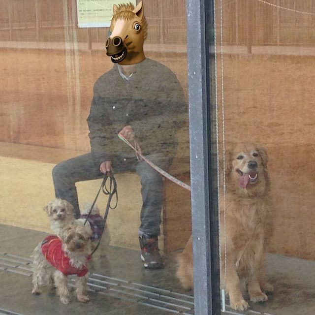 今日は田貫湖に散歩へ行って、まかいの牧場でご飯を食べて、盲導犬の訓練施設に行きました🐕  この前の休みに三井アウトレットに行ってきました🐶 #maltipoo  #マルチーズ #maltese  #말티즈 #プードル #poodle #푸들  #ヨークシャテリア #yorkshireterrier #요크셔테리어  #yorkshire  #요크셔 #ヨーキー #yorkie  #요키  #goldenretriever #골든리트리버 #ゴールデンレトリバー  #instadog #dogstagram  #dog  #犬のいる暮らし #멍스타그램 #펫스타그램  #독스차그램  #多頭飼い #親バカ #愛犬
