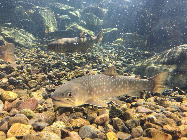 本日もいい天気ですねー(*'ω'*) 先日氷が解けてから大掃除を経て、一気に春らしくなった四季の水槽です! これからのシーズンは活き活きと泳ぐ魚たちを見ることができます。 #北の大地の水族館 #四季の水槽