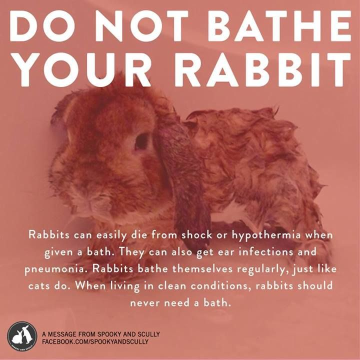Unless your rabbit is under rabbit savvy vet care for a medical condition - Why you should never bathe your rabbit