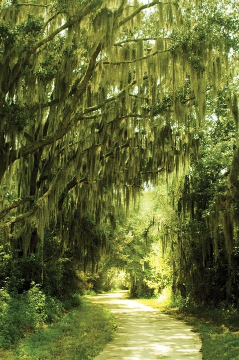Alfred B. Maclay State Gardens -- Tallahassee, FL. #gardenwalkways
