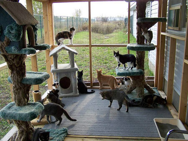 136 best house - outdoor room/cat enclosure/patio tub images on ... - Cat Patio Ideas