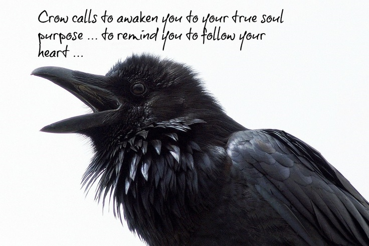 Crow totem. | Spirit Guides | Pinterest | Totems and Crows
