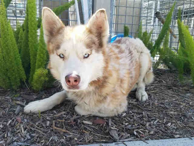 Petharbor Com Animal Shelter Adopt A Pet Dogs Cats Puppies Kittens Humane Society Spca Lost Found Animal Shelter Humane Society Animals