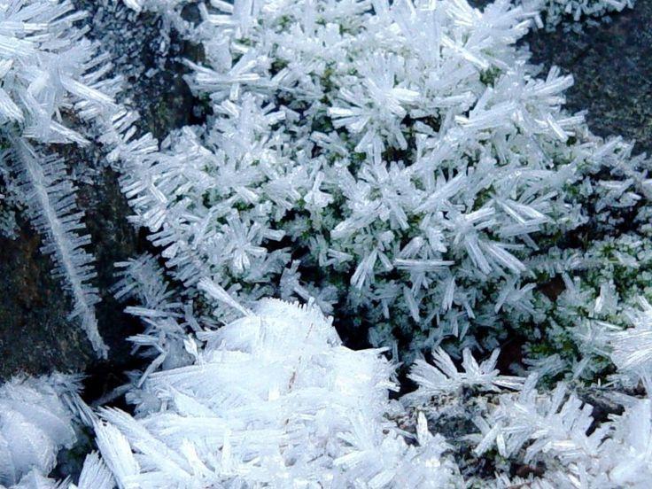 http://www.its.caltech.edu/~atomic/snowcrystals/frost2/Passolt3.jpg