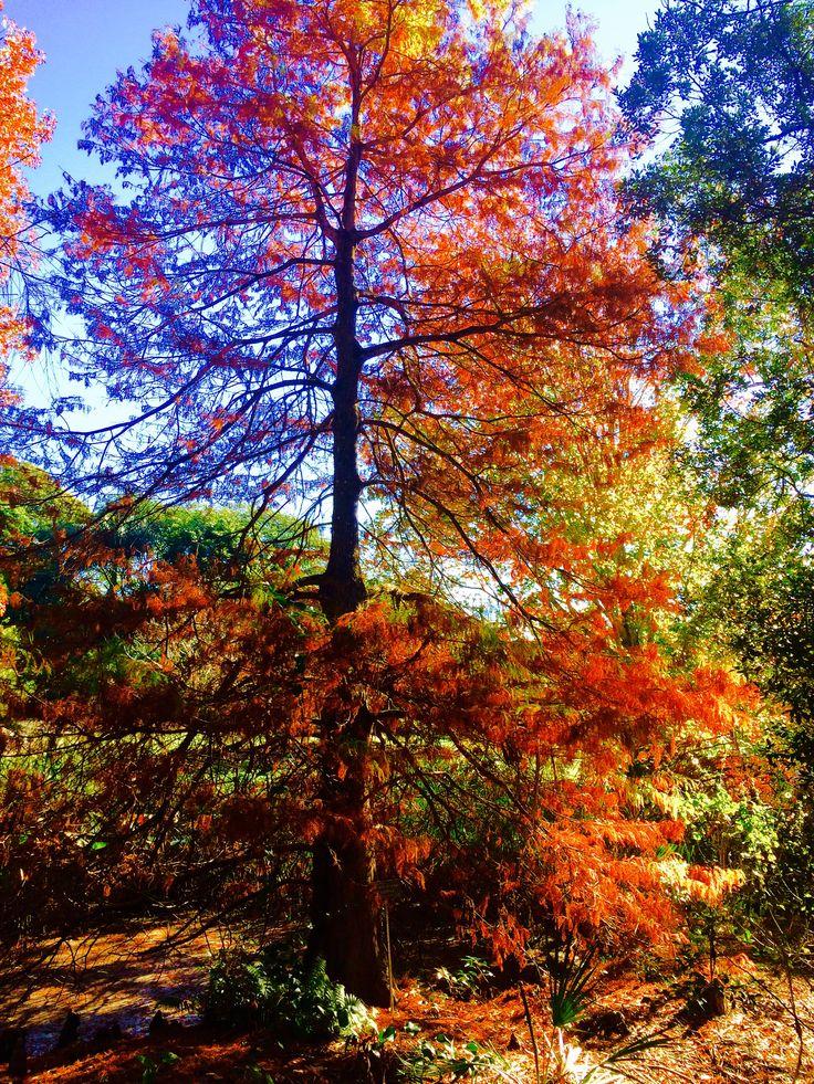 Beauty Creation tree life.