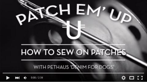 Pethaus Dog Blog News - PetHaus